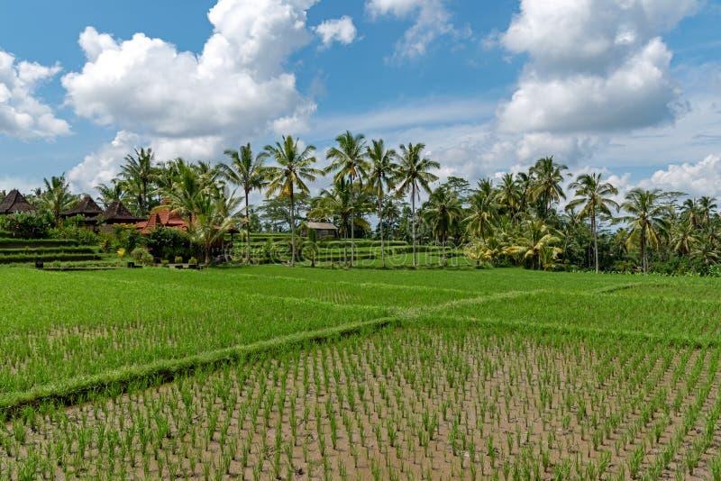 Campo de almofada em Ubud Bali imagens de stock royalty free