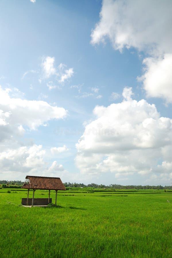 Campo de arroz fotos de archivo libres de regalías