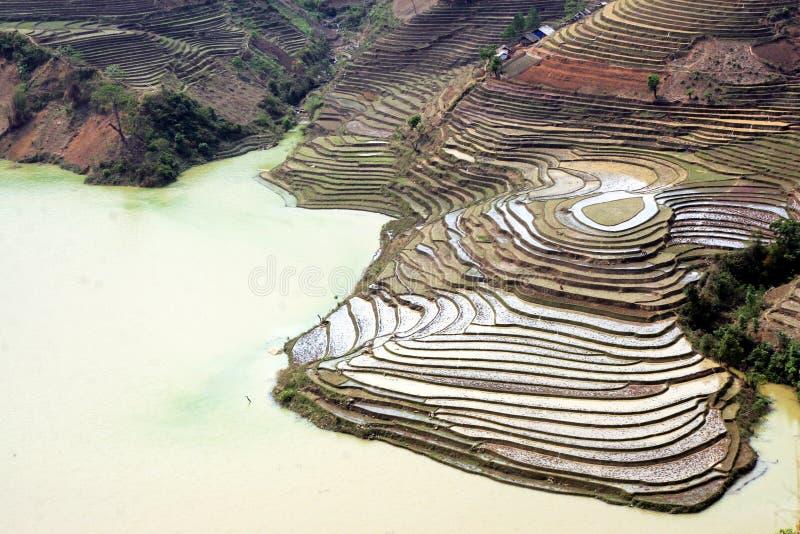 Campo de arroz al principio de la estación imagen de archivo