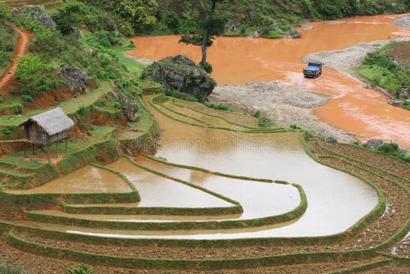 Campo de arroz al principio de la estación fotos de archivo libres de regalías