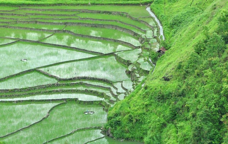 Campo de arroz de la terraza fotografía de archivo libre de regalías