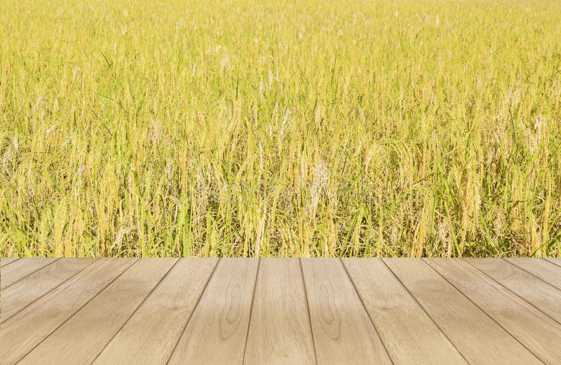 Campo de arroz de madera foto de archivo