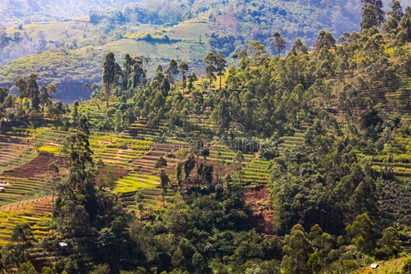 Campo de arroz en el valle foto de archivo libre de regalías