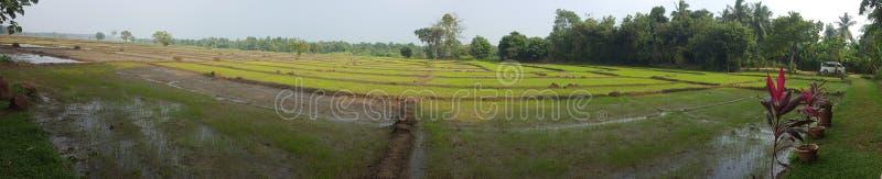 Campo de arroz srilanqués imágenes de archivo libres de regalías