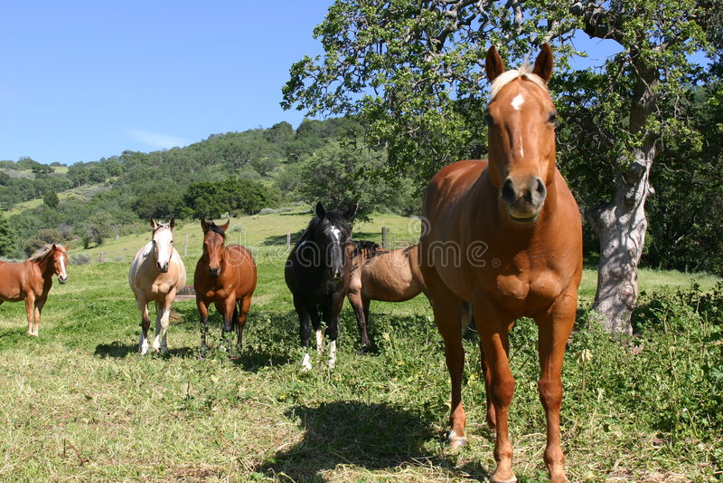 Campo de caballos coloreados imagenes de archivo