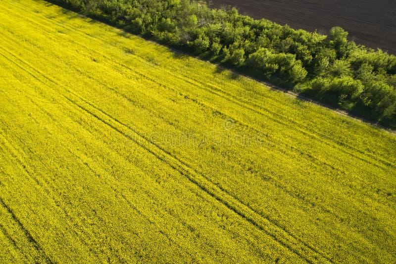 Campo de colza amarelo, vista aérea imagem de stock royalty free
