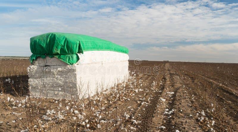 Campo de exploração agrícola fresco Texas Agriculture do algodão da colheita da caução fotografia de stock