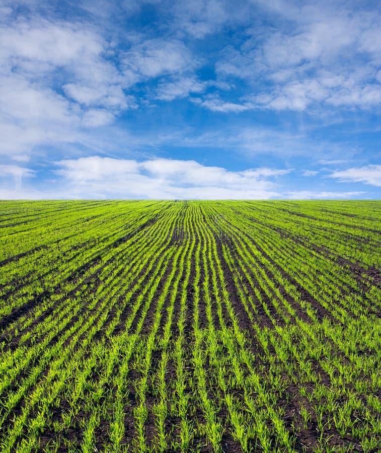 Campo de exploração agrícola verde imagens de stock royalty free
