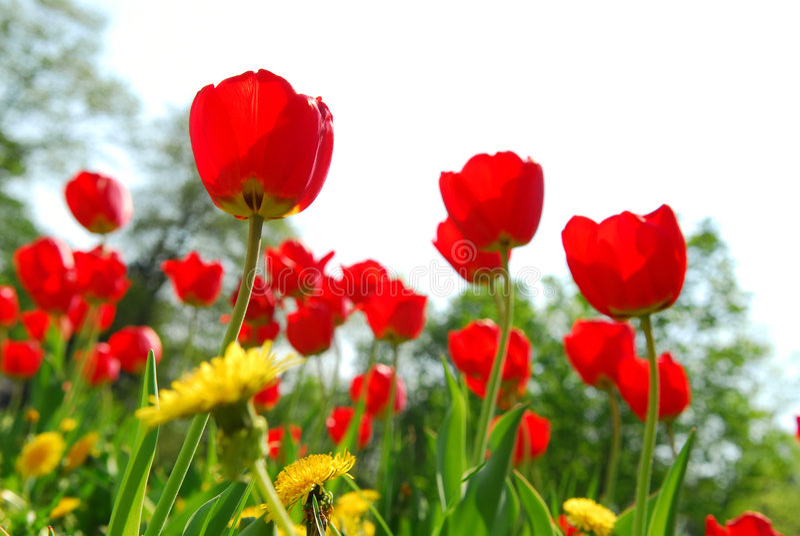 Campo de flor imagens de stock royalty free