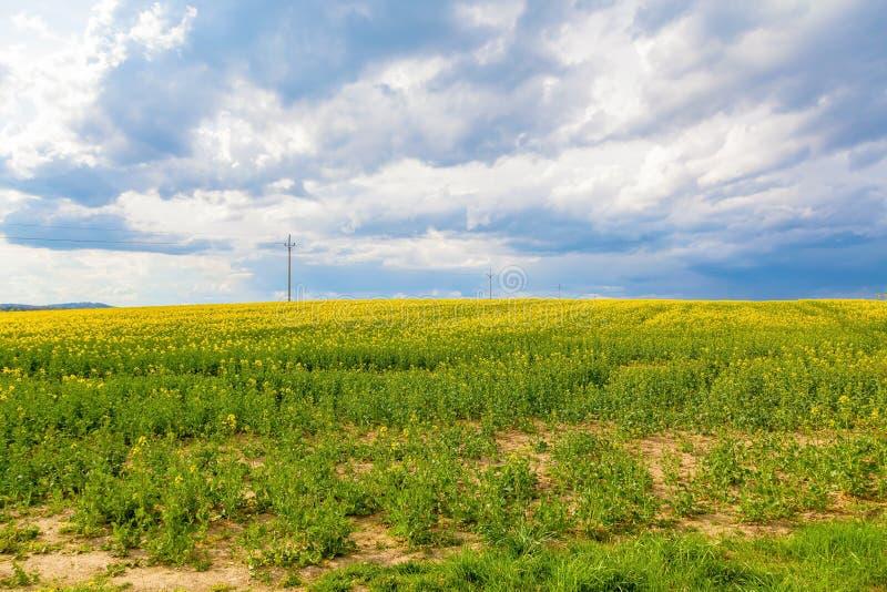 Campo de flor amarillo de la semilla oleaginosa y cielo nublado fotos de archivo libres de regalías