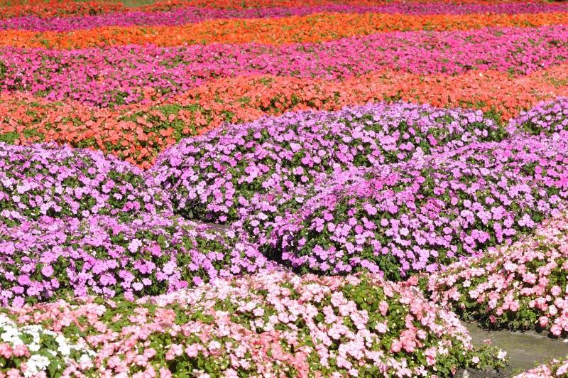 Campo de flor colorido fotografia de stock