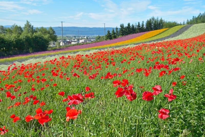 Campo de flor colorido fotos de archivo libres de regalías