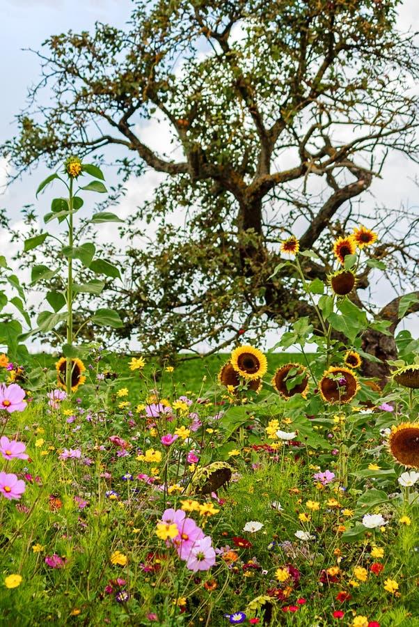 Campo de flor colorido con las flores salvajes debajo del manzano fotografía de archivo