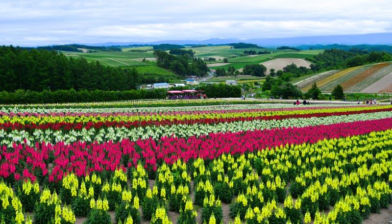 Campo de flor colorido en Hokkaido, Jap?n imagen de archivo libre de regalías