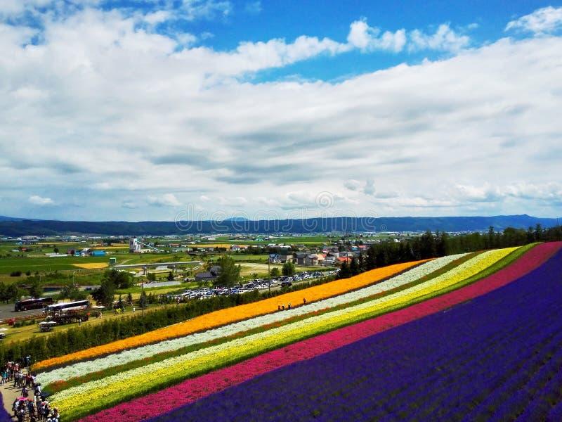 Campo de flor colorido, Hokkaido, Japón fotos de archivo libres de regalías