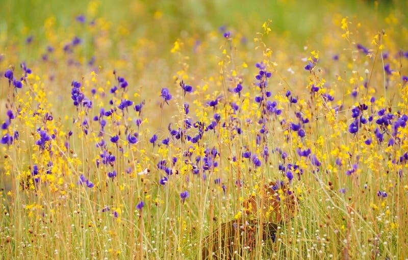 Campo de flor da grama foto de stock royalty free