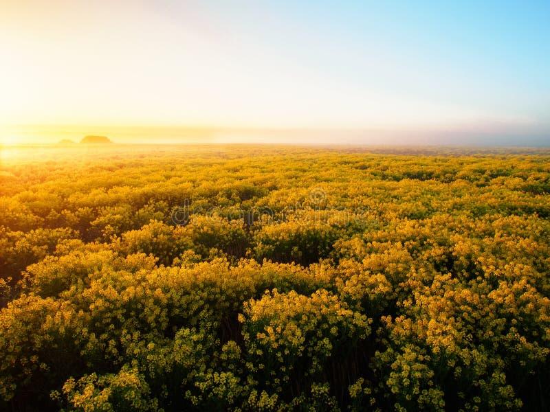 Campo de flor de Misty Morning na primavera imagem de stock royalty free