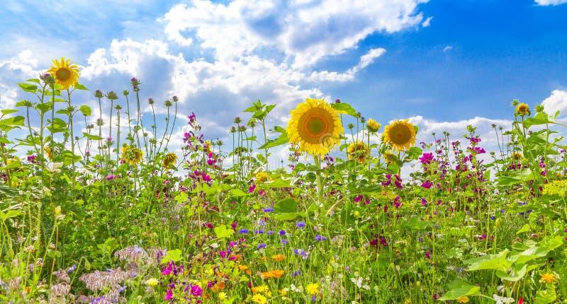Campo de flor en verano fotografía de archivo libre de regalías