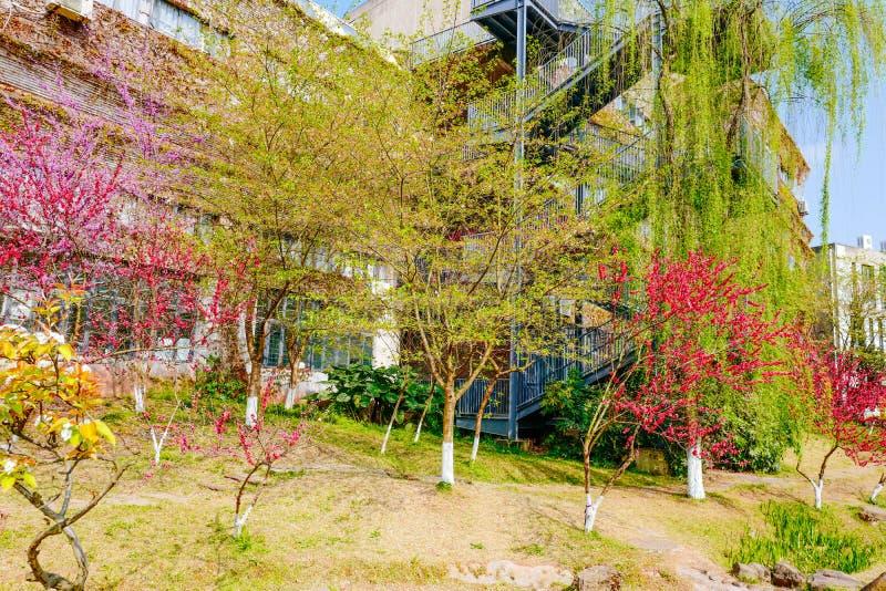 Campo de flor de la rabina en primavera fotografía de archivo libre de regalías