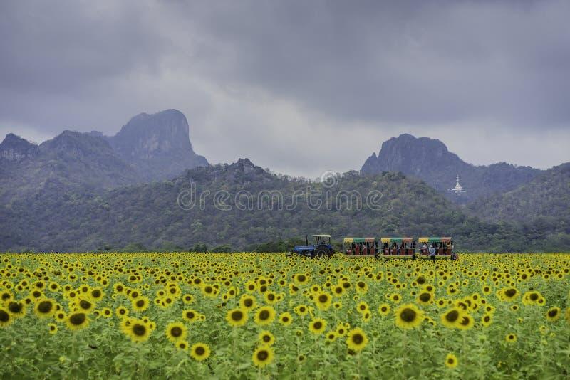 Campo de flor de Lopburi Sun en la central de Tailandia foto de archivo