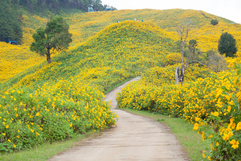 Campo de flor medio del camino fotografía de archivo libre de regalías