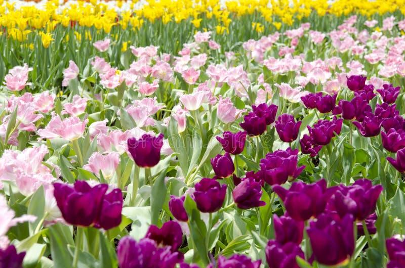 Campo de flor misturado da cor imagem de stock