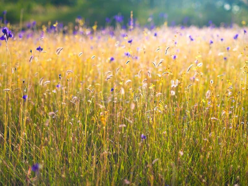 Campo de flor selvagem com o efeito da luz suave adicionado fotos de stock