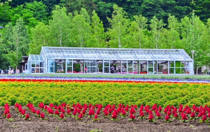 Campo de flor y una casa verde en Hokkaido, Japón fotos de archivo libres de regalías
