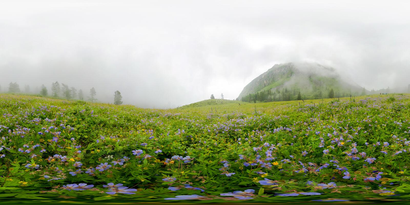 Campo de flores azuis nas montanhas em um dia nebuloso Panorama esf?rico do vr de 360 graus fotografia de stock royalty free