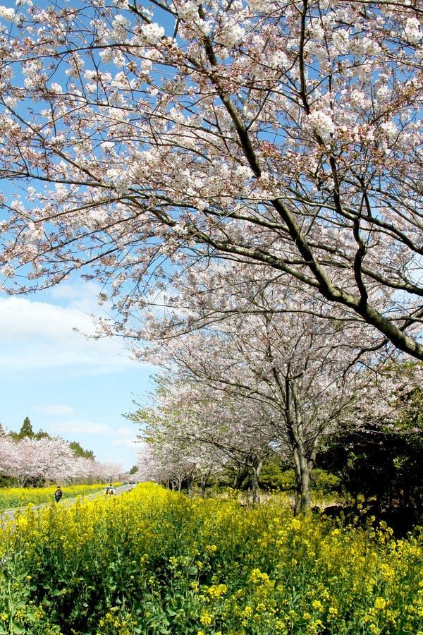 Campo de flores blanco y amarillo rosado imágenes de archivo libres de regalías