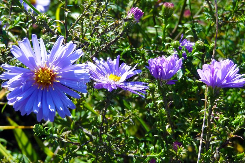 Campo de flores bonito no dia ensolarado Fundo imagens de stock royalty free