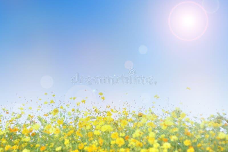 Campo de flores borrado com fundo do céu azul fotografia de stock royalty free