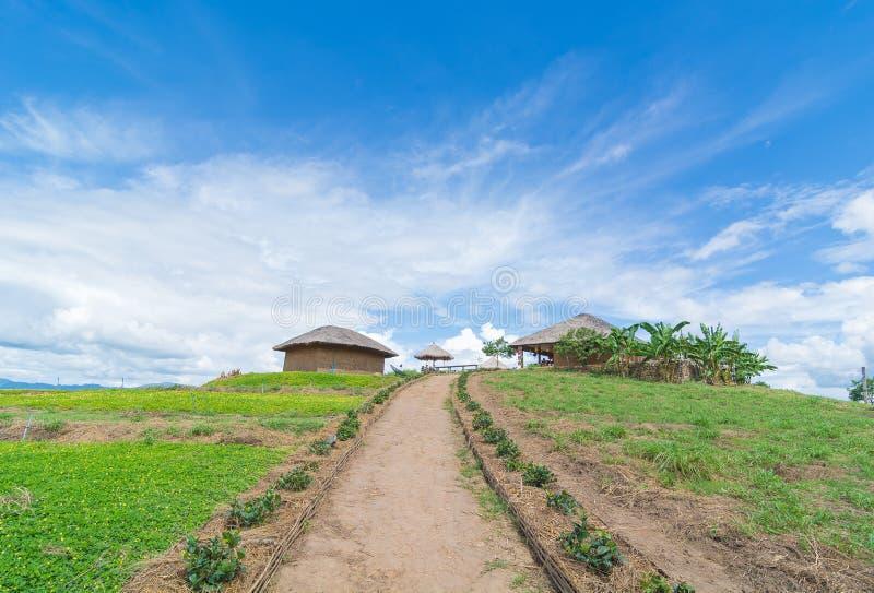 Campo de flores da mola, de casa de campo e do céu perfeito foto de stock royalty free