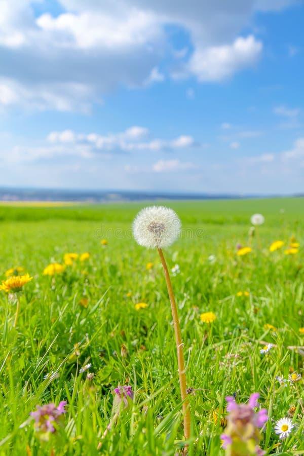 Campo de flores da mola e do céu azul foto de stock