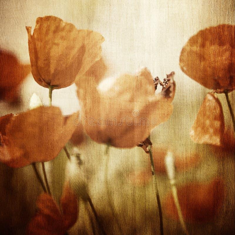 Campo de flores de la amapola de Vinatge fotos de archivo