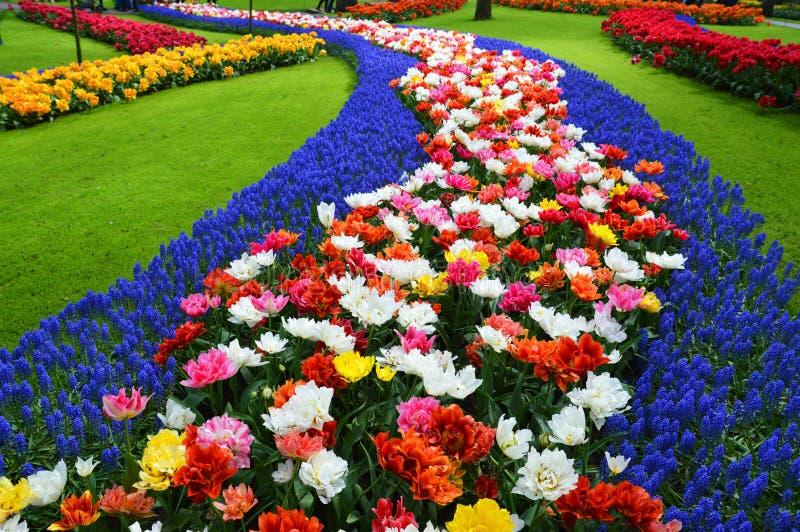Campo de flores florecientes imagen de archivo libre de regalías