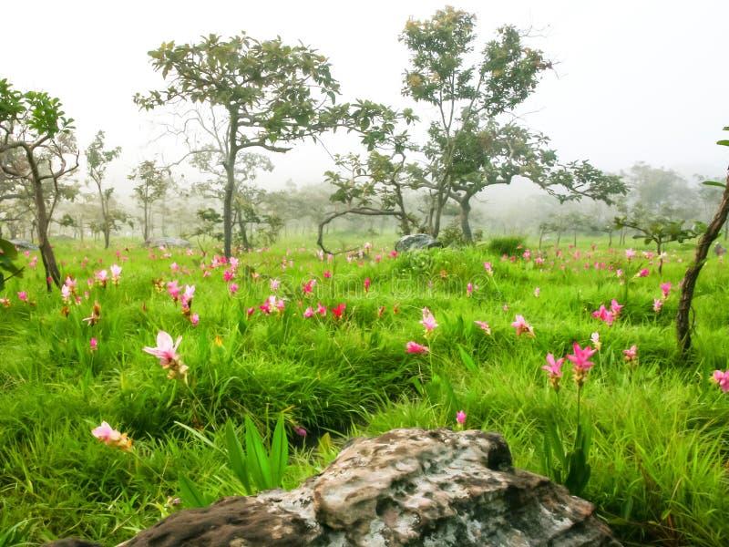 Campo de flores salvajes imágenes de archivo libres de regalías