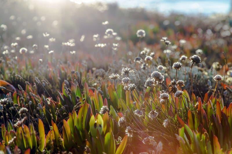 Campo de flores salvajes hermosas foto de archivo libre de regalías
