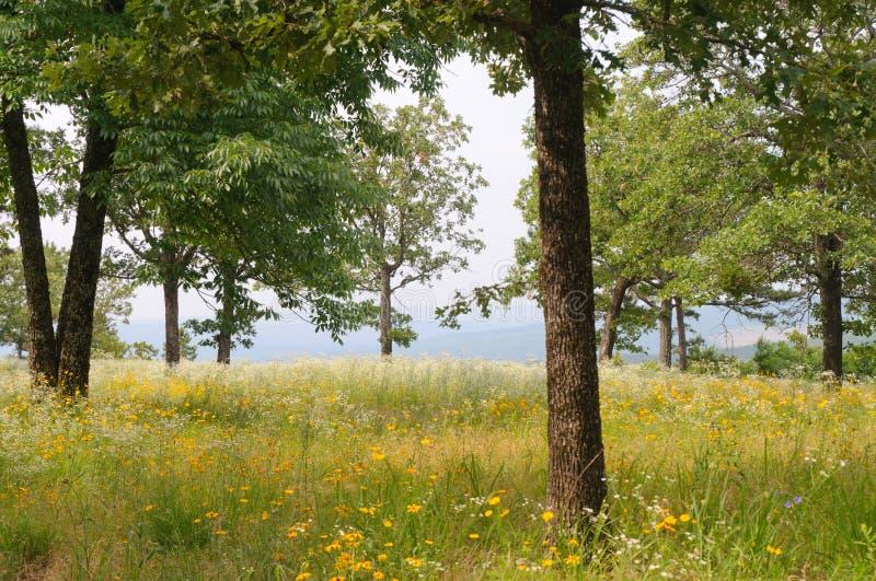 Campo de flores y de árboles fotos de archivo