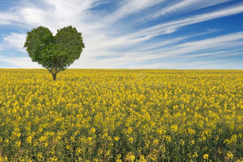 Campo de florescência amarelo da violação com a árvore da forma do coração fotos de stock royalty free