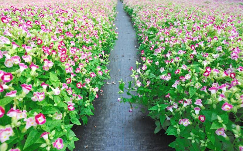 Campo de florescência do berçário da flor imagem de stock