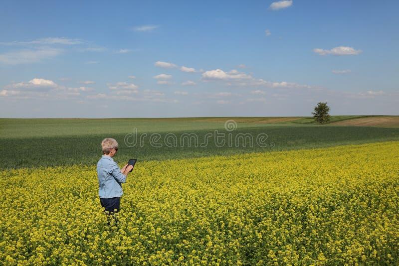 Campo de florescência de exame da colza do fazendeiro fêmea na mola foto de stock royalty free