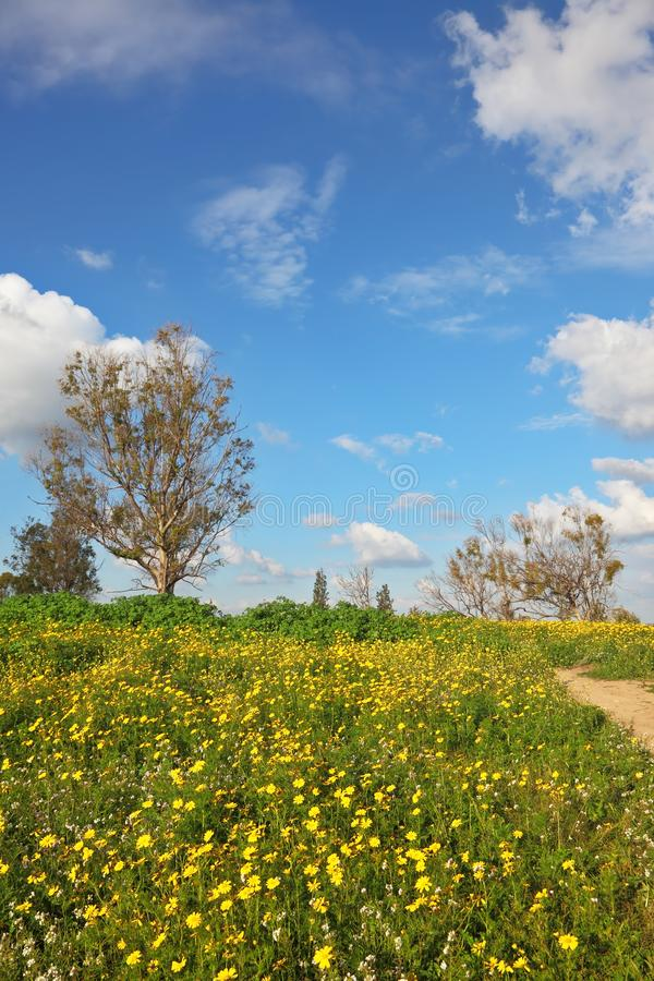 Campo de florescência maravilhoso da mola fotos de stock royalty free