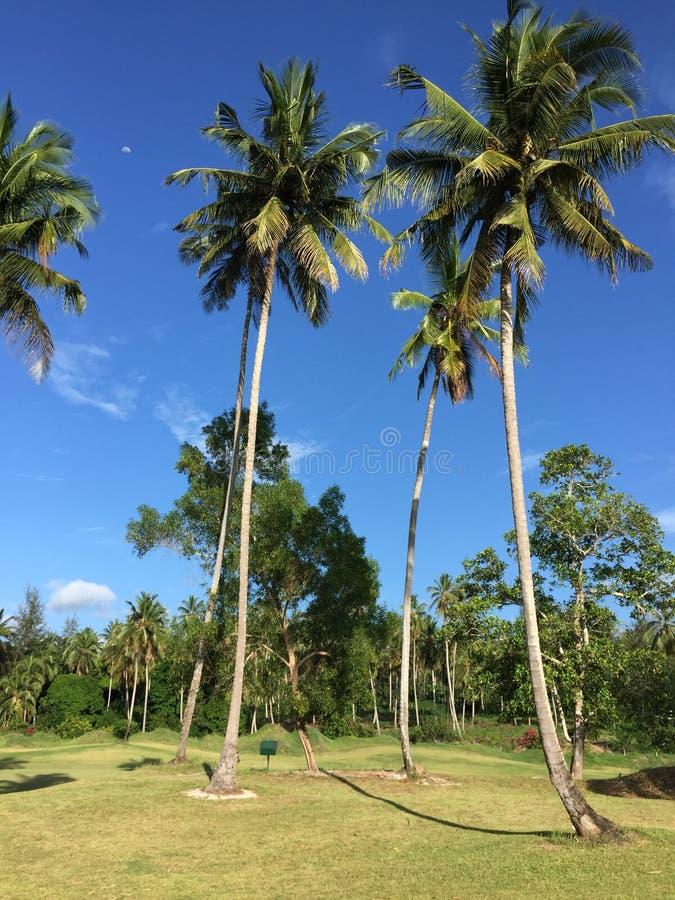 Campo de golf africano con las palmeras que alinean el espacio abierto imagen de archivo