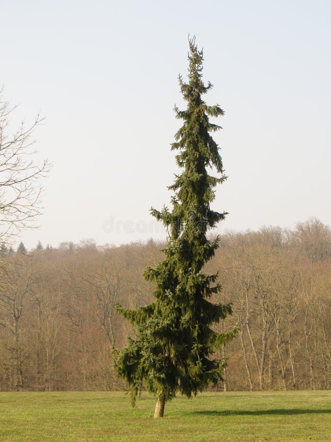 Campo de golf con el árbol imagen de archivo libre de regalías