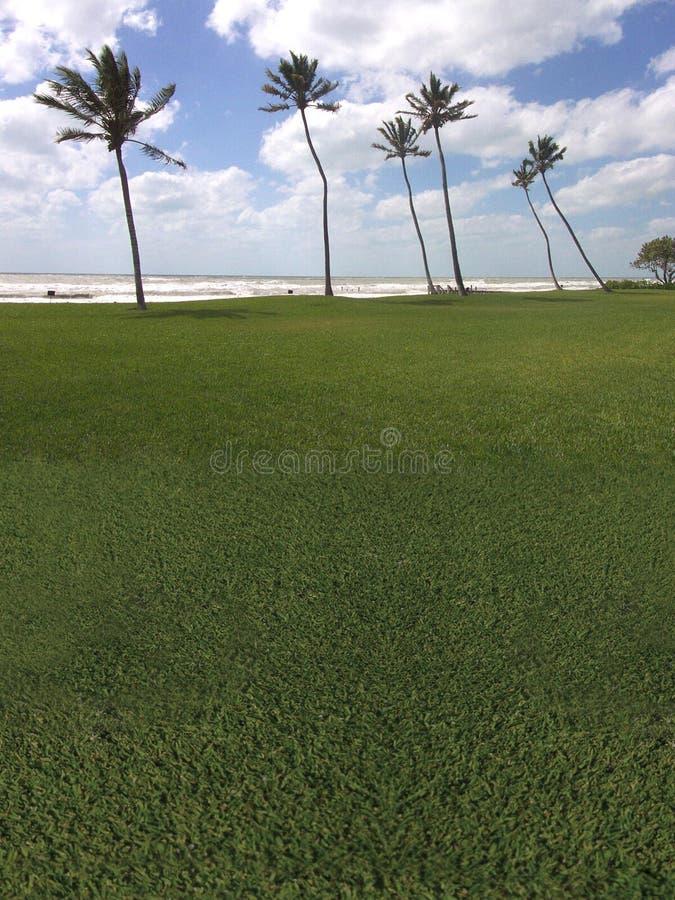Campo de golf de la palmera la playa fotografía de archivo libre de regalías