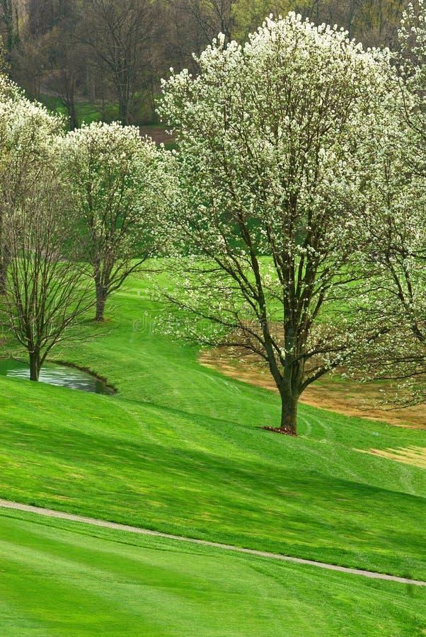 Campo de golf en primavera imagenes de archivo