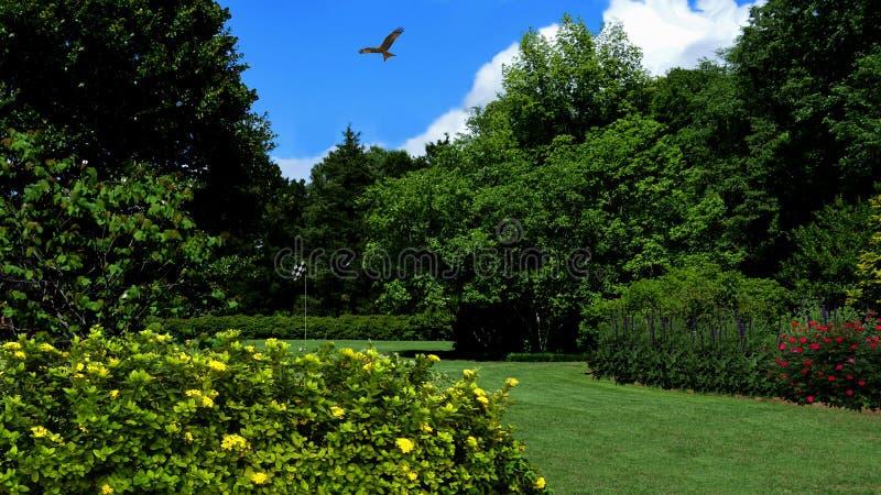 Campo de golf y halcón fotografía de archivo