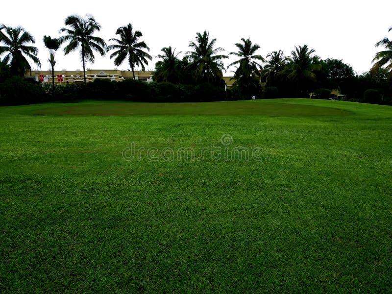 Campo de golfe com verde ?rvore no campo de golfe fotografia de stock royalty free