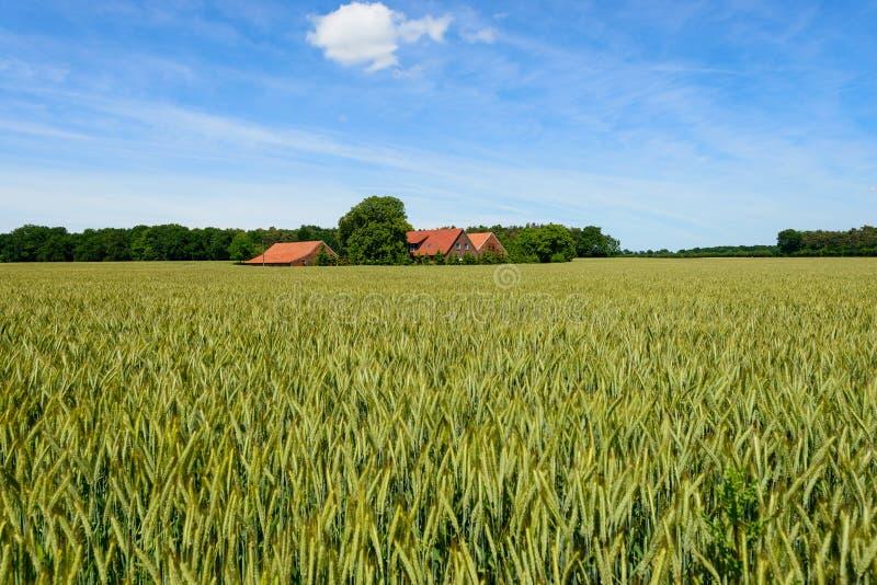 campo de grão com exploração agrícola e o céu azul fotos de stock royalty free